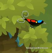 wilsonsbird