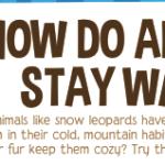 animals stay warm
