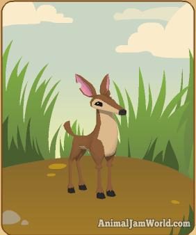 animal-jam-deer-codes-3