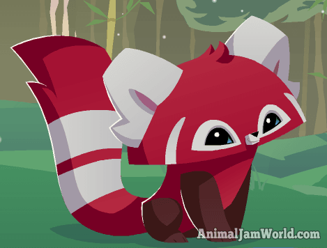 Red Pandas in Animal Jam - Codes, Pictures & More!